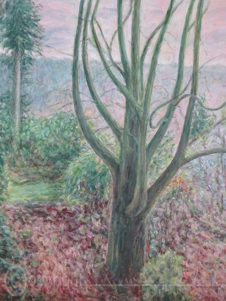 Rotbuche im Garten Heidelberg 1997