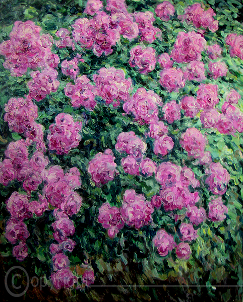 Pink Rosen Heidelberg 1991