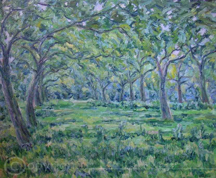 Apfelbäume Soest 1965