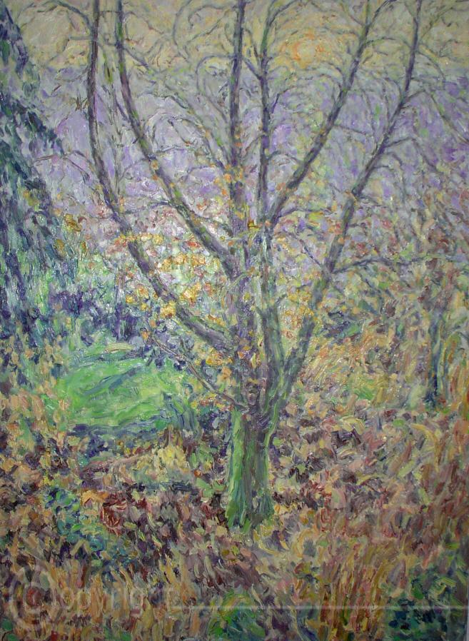 Rotbuche im Garten Heidelberg 1989