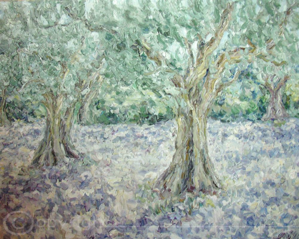 Uralte Olivenbäume Mykonos 1953